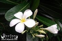 aticle_thaiherbs_15-04-55_D_003.html